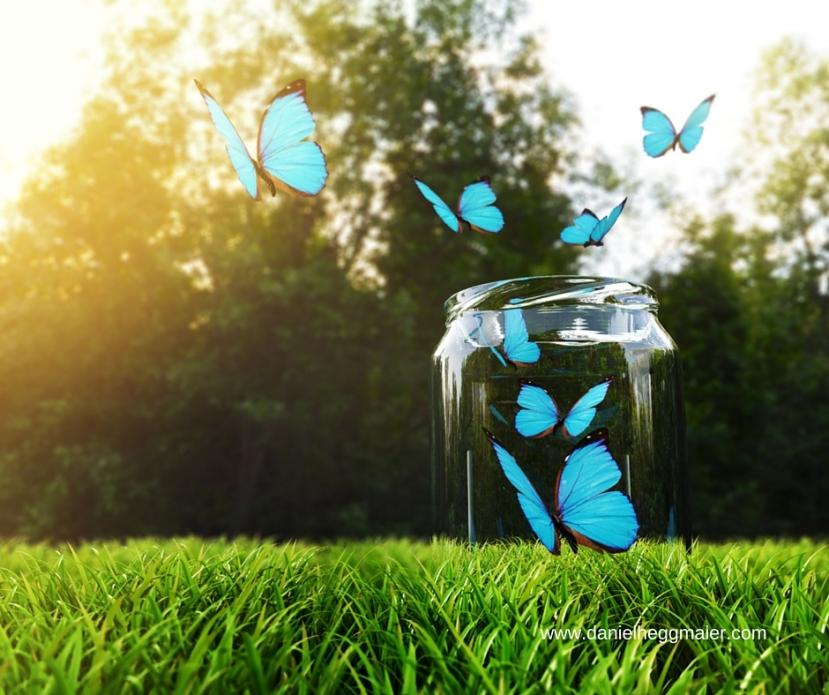 Themenplan: Warum Sie ein Schmetterlingsnetz für Gelegenheitenbrauchen