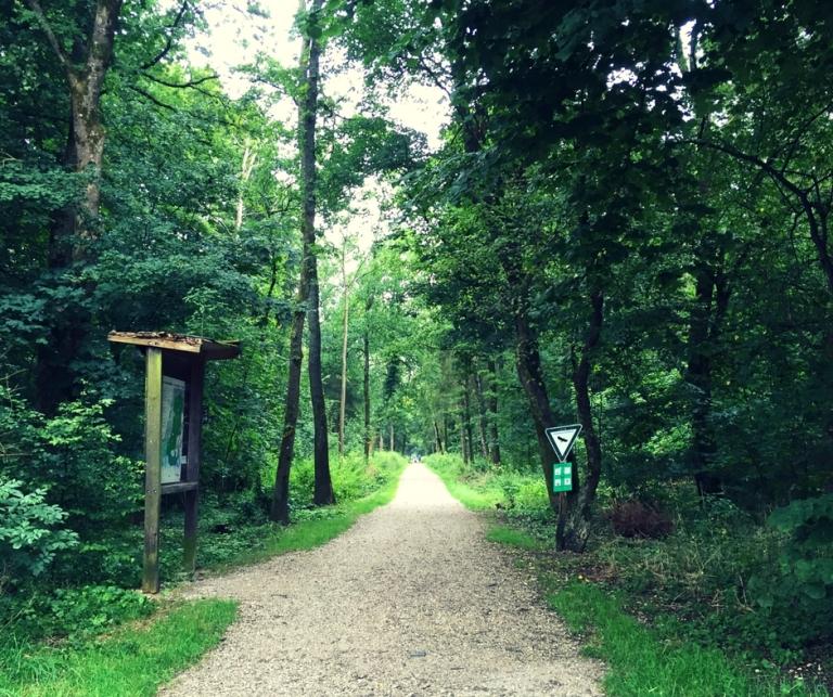 Perlacher Forst